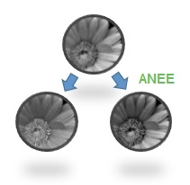 Adaptive Nonlinear Edge Enhancement (ANEE) - Traditional linear edge enhancement algorithms simply filter image data, but this amplifies noise, thereby reducing the S/N ratio. ANEE uses a unique two stage process to enhance only edges and leave uniform regions with their original data quality. The result is better defined edges without loss of detail.